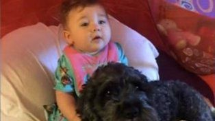 La tierna historia de Polo, el perro que murió al salvar a una bebé de un incendio