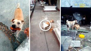 El video de la perra que pide para alimentar a sus cachorros se volvió viral.