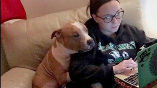 El abrazo de un pitbull adoptado y su dueña conmueve a las redes