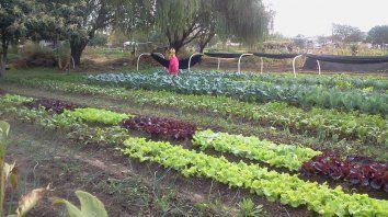 hay que alentar modelos de produccion agroecologicos de alimentos