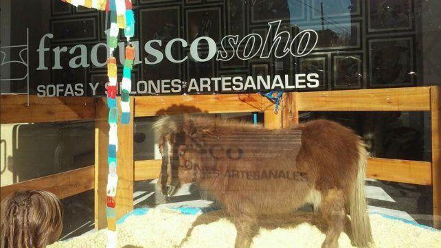 Polémica por la exhibición de un pony en la vidriera de una mueblería