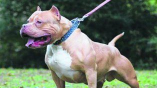 Un perro de similares características atacó a una beba y la mató.