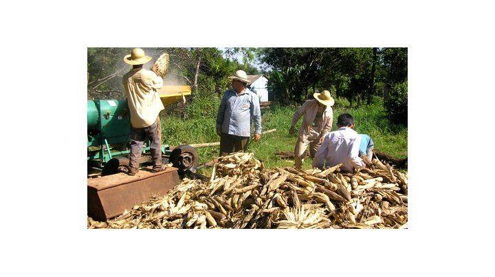 materia prima. Las semilleras y los productores de la zona núcleo proveen materiales para el combustible.
