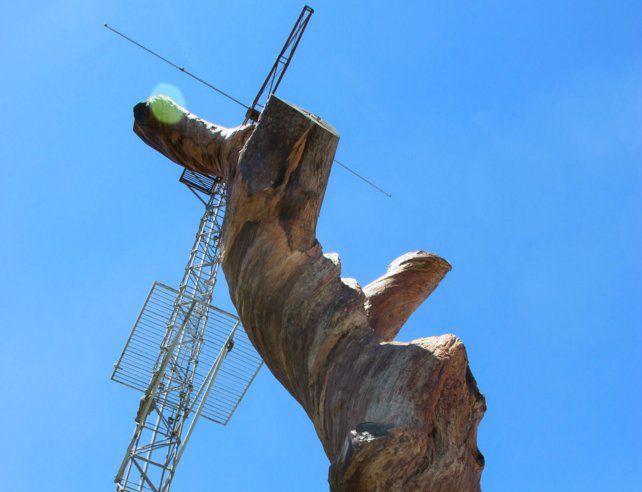 El pino sufrió diversas dolencias a largo del último medio siglo y finalmente se secó poco después de 2012.