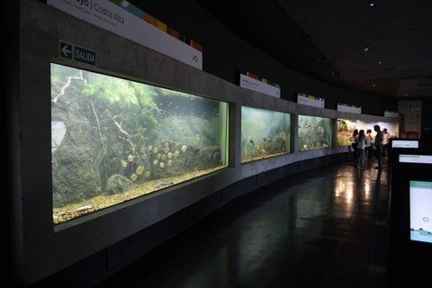 flamante. Toda la riqueza ictícola del Paraná podrá ser disfrutada por los rosarinos en el acuario más grande del país