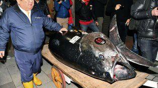 Subastan un ejemplar de atún en un precio increíble de 3 millones de dólares