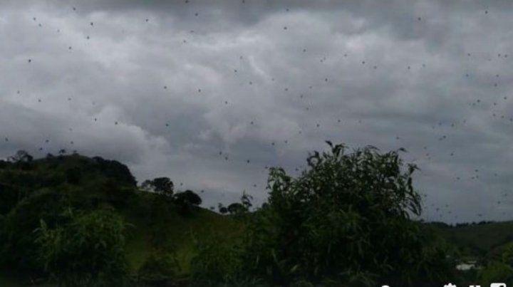 La lluvia de arañas fue captada en video.