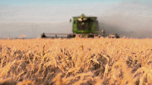 cosecha. El informe prevé una producción de 125 millones de toneladas.