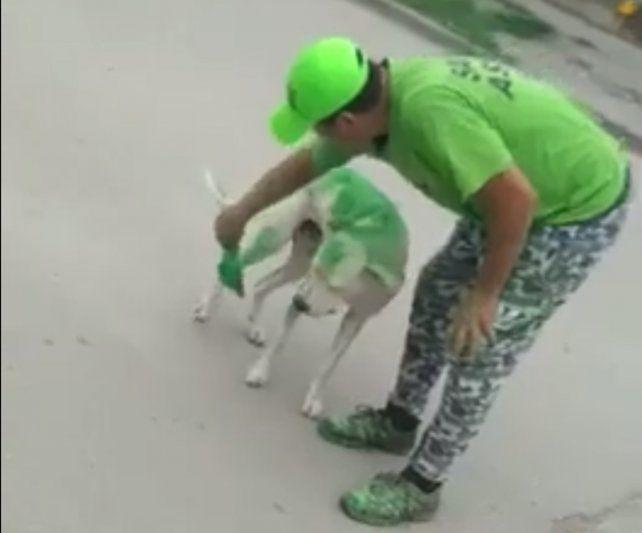Un grupo de militantes pintó a un perro del color de su candidato