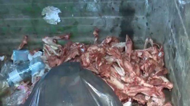 Macabro: hallan 30 esqueletos y cráneos de perros faenados en un contenedor