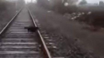 un maquinista detuvo el tren para liberar un perro atado a la via