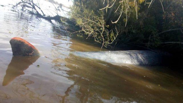 Hallan muerta a una ballena en aguas del río Paraná