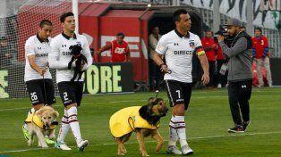 Colo Colo salió a la cancha con perros en adopción
