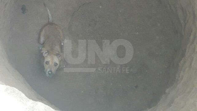 VIDEO: Así rescataron a un perro de un pozo