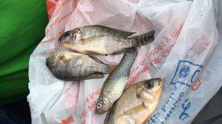 Increíble: una lluvia de peces sorprende a una localidad en el norte de México