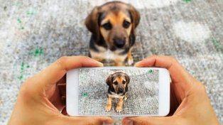 Impulsan una aplicación para usar en caso de pérdida o hallazgo de mascotas