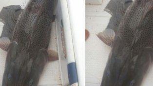 VIDEO: pescaron un surubí de 60 kilos en el río Paraná