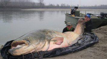 sorpresa por la captura de un pez monstruo en un rio