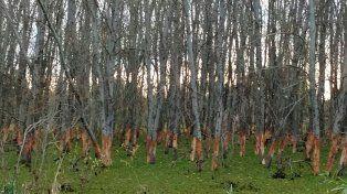 Advierten invasión de nutrias que ataca plantaciones en el sur entrerriano