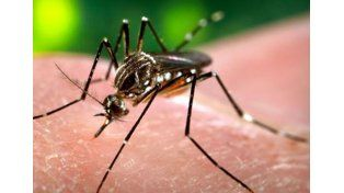 Piden que se incorpore la prevención del dengue a la campaña contra la gripe A