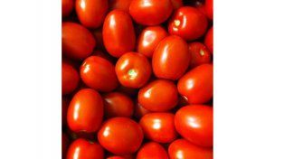 Tomate: Al productor le pagan el kilogramo de tomates peritas 7
