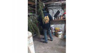 La Policía Federal allanó un secadero de marihuana en un galpón de Oro Verde