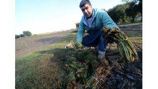 Faltan frutas, verduras, los precios suben y en Paraná recién comenzó la siembra
