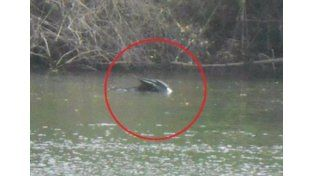 Temor por una extraña criatura en un río de México