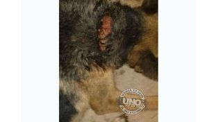 Denuncian cruel maltrato a una perra en la zona de la Base Aérea