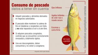 Semana Santa: datos a tener en cuenta a la hora de consumir pescados