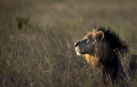 El animal apareció en una hora pico en pleno centro de la capital de Kenia. (Foto de archivo)