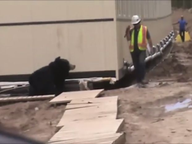El obrero tenía una debilidad especial por los animales salvajes