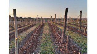 La nueva Toscana. Con sus lomadas y suelo calcáreo