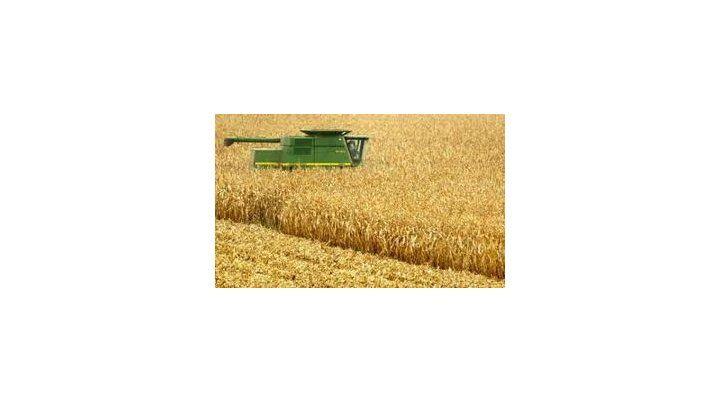 Favre estaba trabajando en la cosecha del maíz. Foto Archivo Télam.