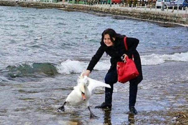 El cisne no sobrevivió al maltrato de la mujer.