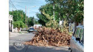 Aún no terminan de juntar las ramas de las calles