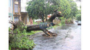 En Gobernador Sola. Las ramas se juntaron a 12 días de la tormenta del 19 de febrero. (Foto: UNO/Juan Ignacio Pereira)