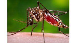 Sin mosquitos no hay dengue: Medidas preventivas