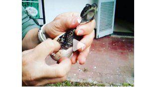 Día de la Vida Silvestre: así nace un Yacaré