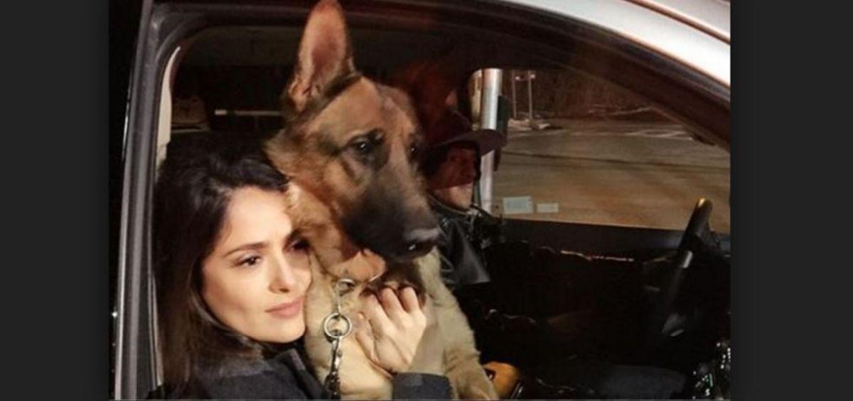 Confesó el asesino del perro de Salma Hayek