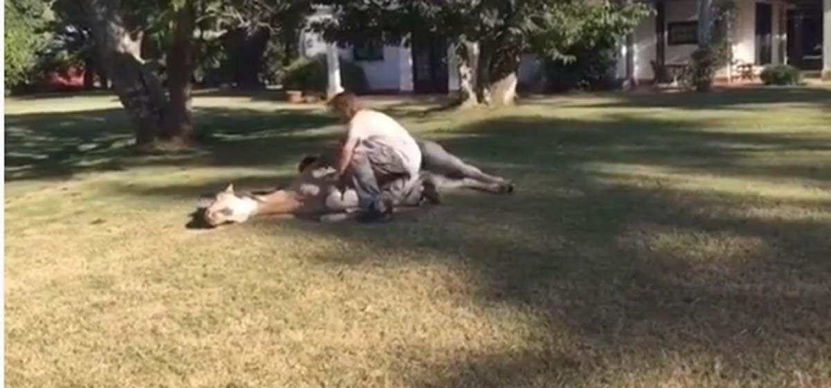 Impresionante video de Facundo Arana: La técnica que usa para acostar un caballo