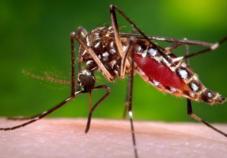 Reproducción. Habrá meses de lluvia; clima ideal para el mosquito.  Foto: AP