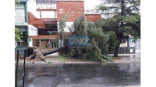 Un arbol de gran porte cayó sobre los cables de la luz en calle Cura Álvarez