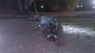 Apareció un yacaré en las termas de Chajarí