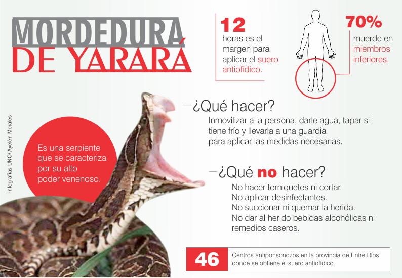 Qué hacer ante una mordedura de serpiente venenosa