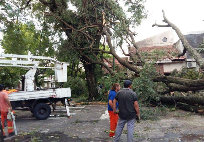 Temporal en Paraná: Cayeron casi 1.000 árboles y hay 250 familias damnificadas