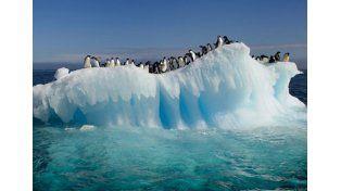 Pingüinos amenazados por un iceberg en La Antártida