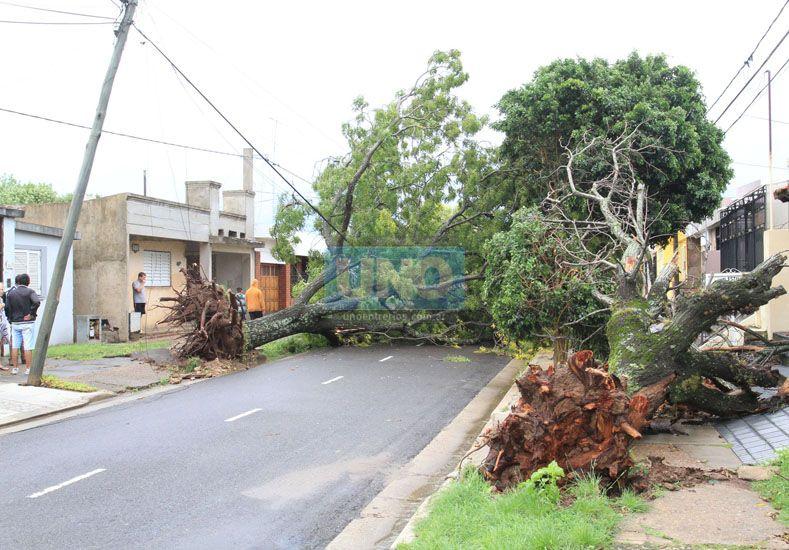 Los árboles tirando cables fue una postal que se replicó en cada punto de la ciudad. Fuente UNO/ Juan Ignacio Pereira.