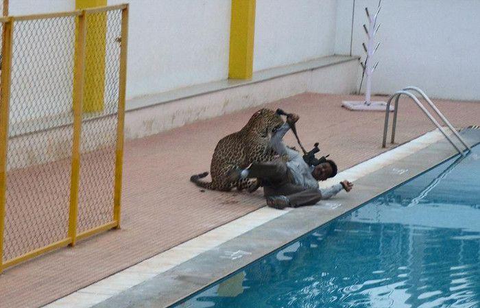 Pánico en una escuela: irrumpió leopardo y dejó a cinco personas gravemente heridas