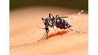 Se confirmó un caso de Chikungunya en Entre Ríos